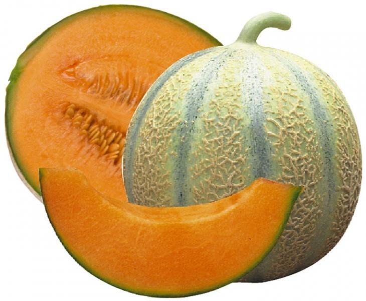 quand planter le melon ? Calendrier de plantation des melons