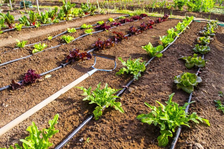 Comment choisir son syst me d 39 arrosage pour son potager - Arrosage automatique jardin potager ...